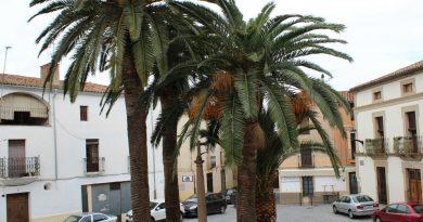 El Ayuntamiento advierte sobre la plaga del Picudo Rojo en el Palmeral de Coria y ofrece información a los particulares