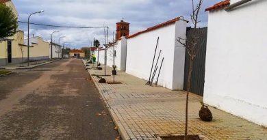 El Ayuntamiento replanta los árboles arrancados en las fiestas de Rincón del Obispo